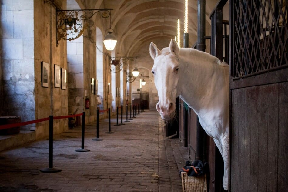 horse from the equestrian academy